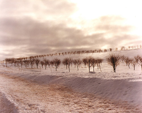 "Patricia McGrady's piece entitled ""Frozen Orchard No. 2"""